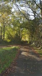 Farm approach road